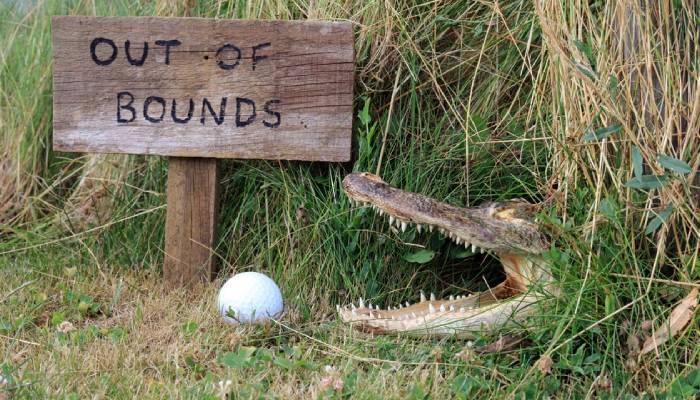 golf-safety-pet-the-gators